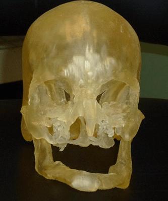 model 3D czaszka